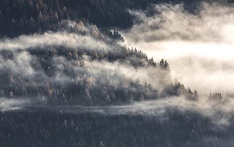 trees on mist photo