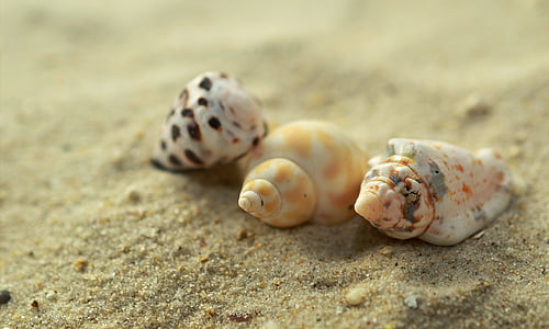 three white and yellow sea shells on brown sand