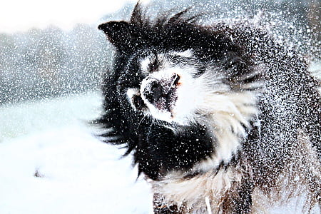 long-coated black and white dog on snow during daytime