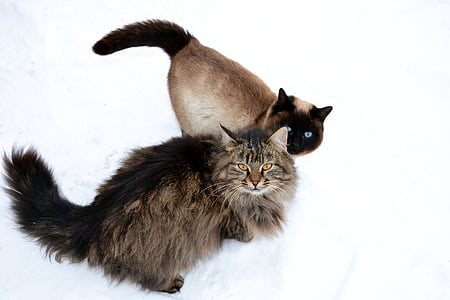 two brown and black cats