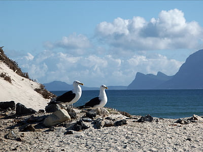 two white-and-black seagulls standing on gray sands