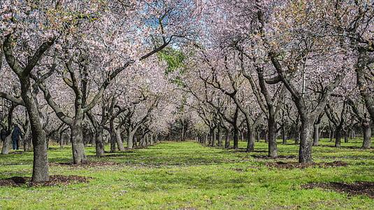 gray trees on grass field