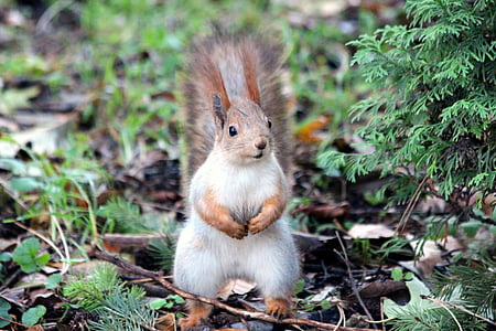 white and brown squirrel