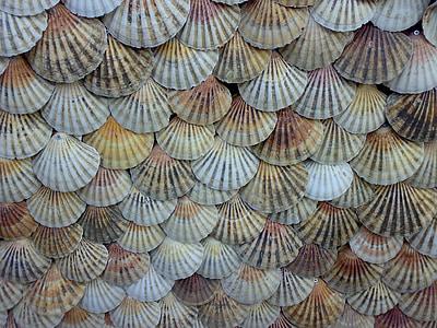 sea shell decor lot