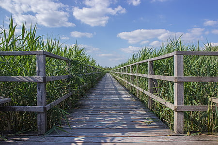 landscape photo of brown wooden pathway