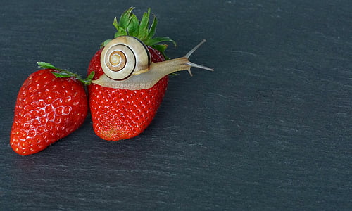 snail on red strawberry