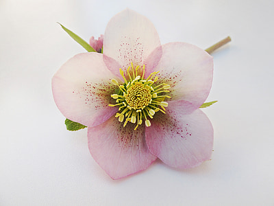 photo of pink petaled flower