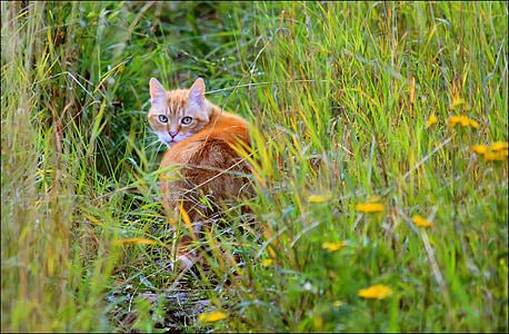orange cat on grass field during daytime