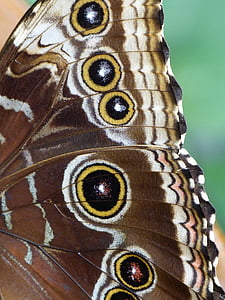 macro shot photography of butterfly