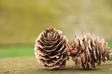 two pinecones on green surface