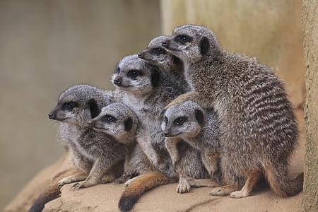 six gray lemurs