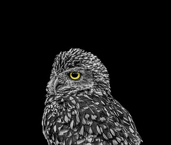 focus photo of black and gray owl
