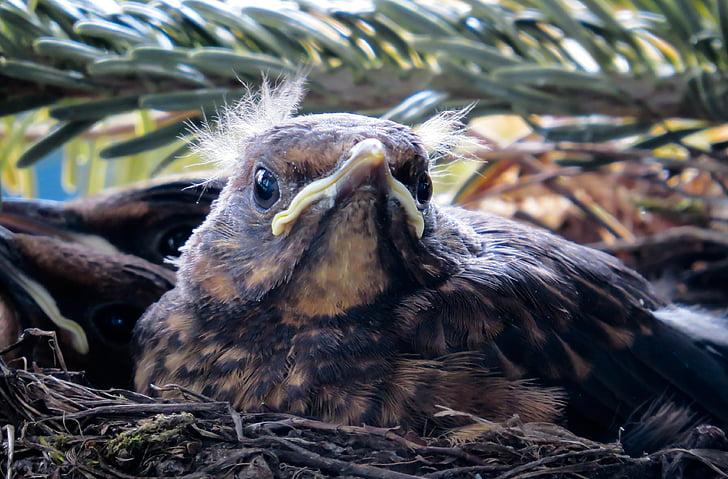 brown bird in bird's nest