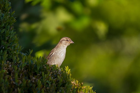 focus photography of gray bird on green plant