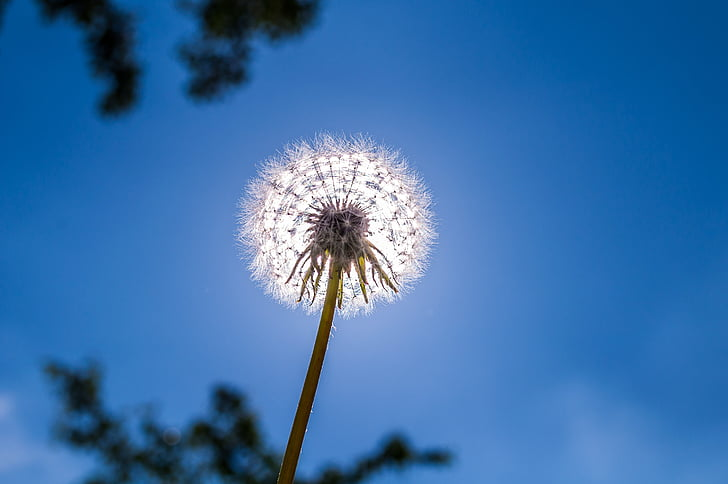 low angle photo of dandelion flower under blue sky at daytime