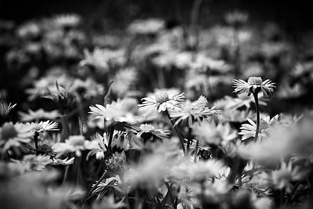 photography of daisy flowers