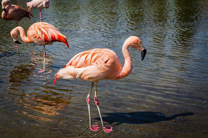 four pink flamingo at daytime