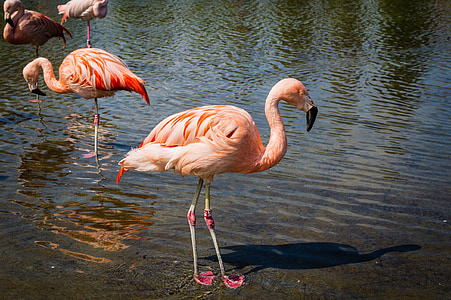 four pink flamingo at daytime