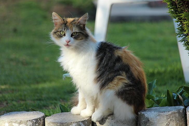 orange tabby cat on concrete pot