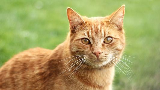 shallow focus of orange cat