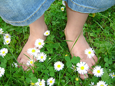 person standing on aster flower field