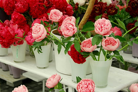 pink and red petaled flowers