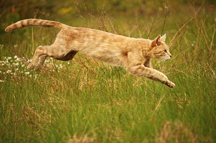 orange tabby cat jumping