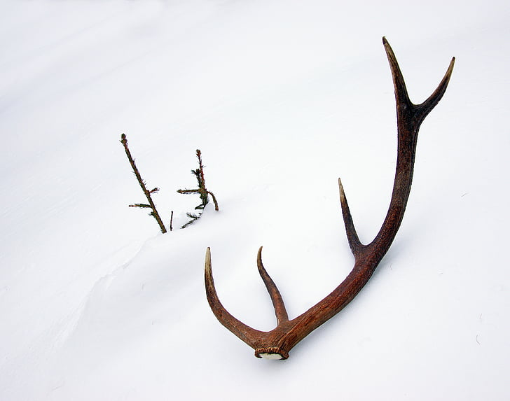 brown animal horn on snow