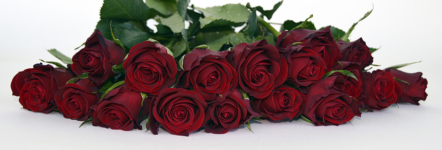 red roses lot