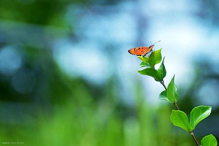 orange butterfly on green plants