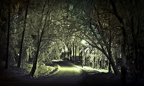 pathway between trees during winter