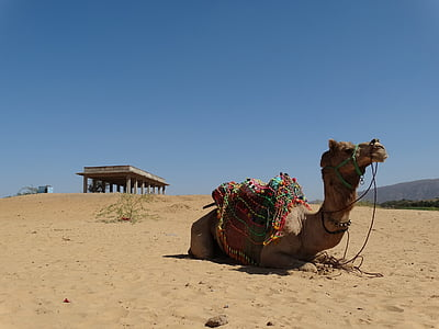 brown camel lying on brown sand during daytime