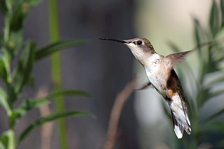 selective focus photo of hummingbird