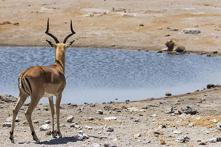 brown deer on seashore