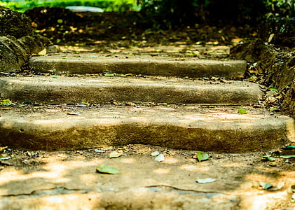 close up photography of stair with dried leaves