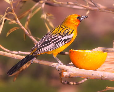 yellow and black bird perched on wood branch