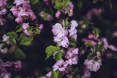 pink flowers surrounded by green leaves