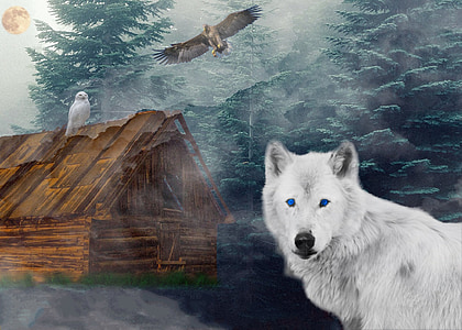 white wolf and wood shack