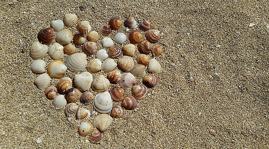 seashell form with a heart at the sand