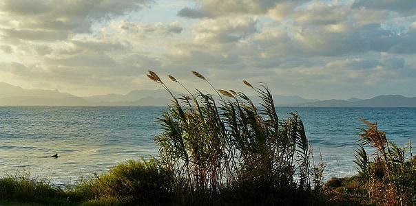 green grasses beside sea landscape photography