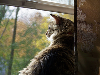 brown tabby cat on window