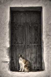 white, black, and orange cat sitting near door