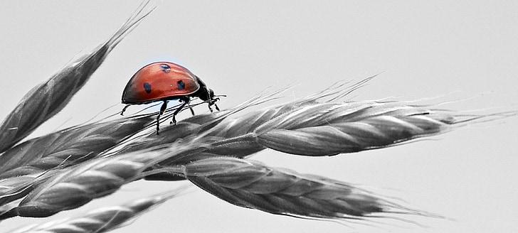 ladybug on gray wheat painting
