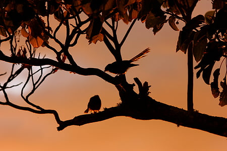 two birds perched on tree branch
