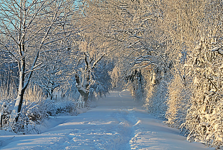 white snow on pathway at daytime