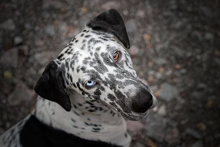 selective focus photography of Dalmatioan