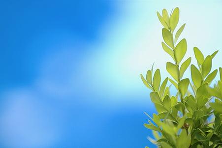 focused photo of green leaf