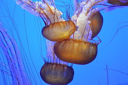 underwater white jellyfish