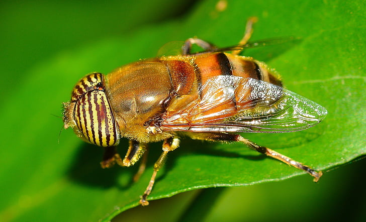 yellow horsefly perching on green leaf