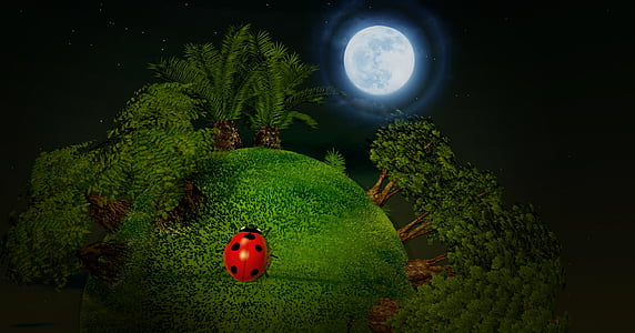 red and black ladybug on green grass photograph